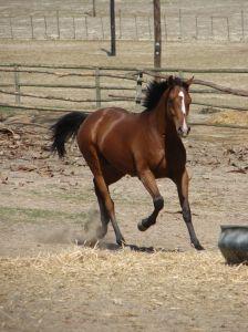 Wellness és lovaspark